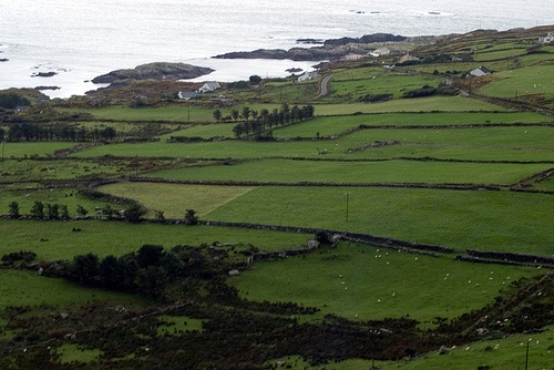 Stone Walls in the Ring of Kerry