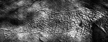 Norwegian Petroglyph of Dolphin, ca. 3,000BC (?)